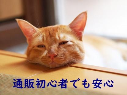 ほっとしている猫